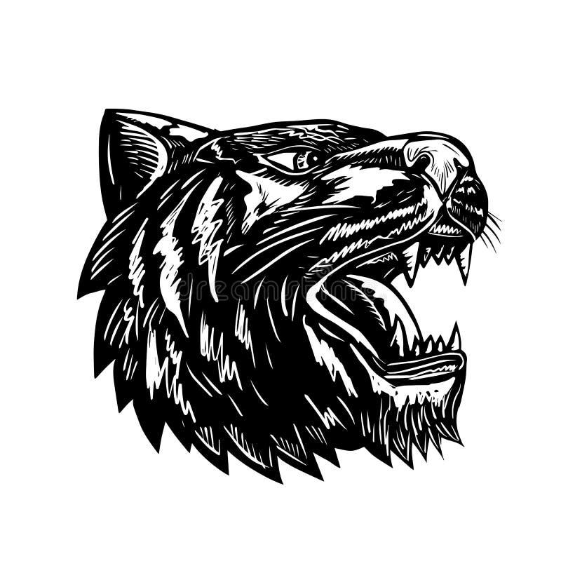 Tiger Growling Scratchboard royalty free illustration