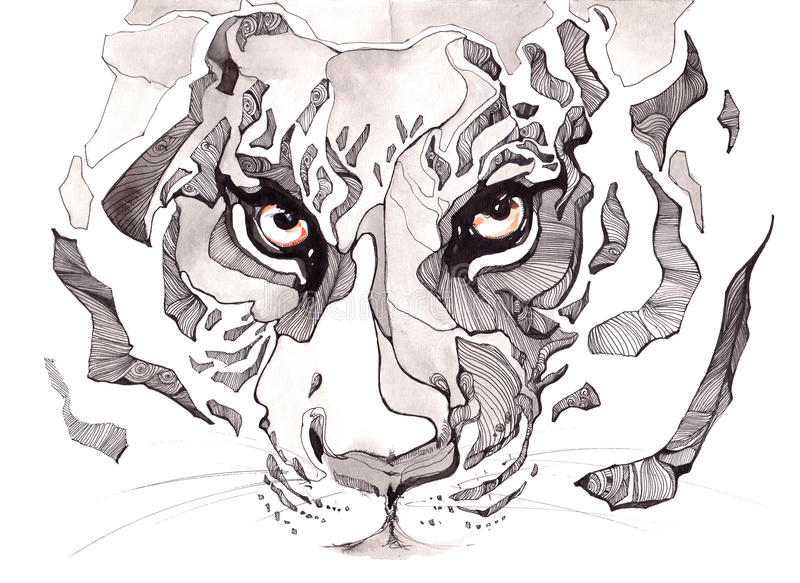 Tiger. Harsh opinion forest king of beasts vector illustration