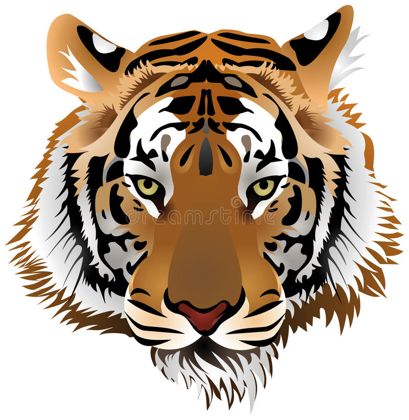 Tiger head. Color image