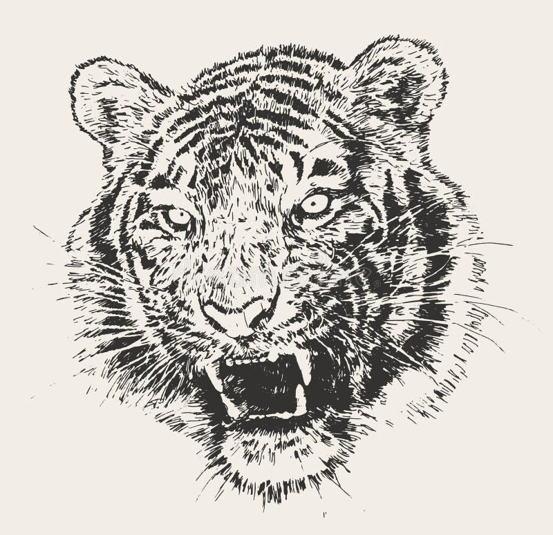 Tiger Head Engraving Vector Hand Getrokken Schets royalty-vrije illustratie