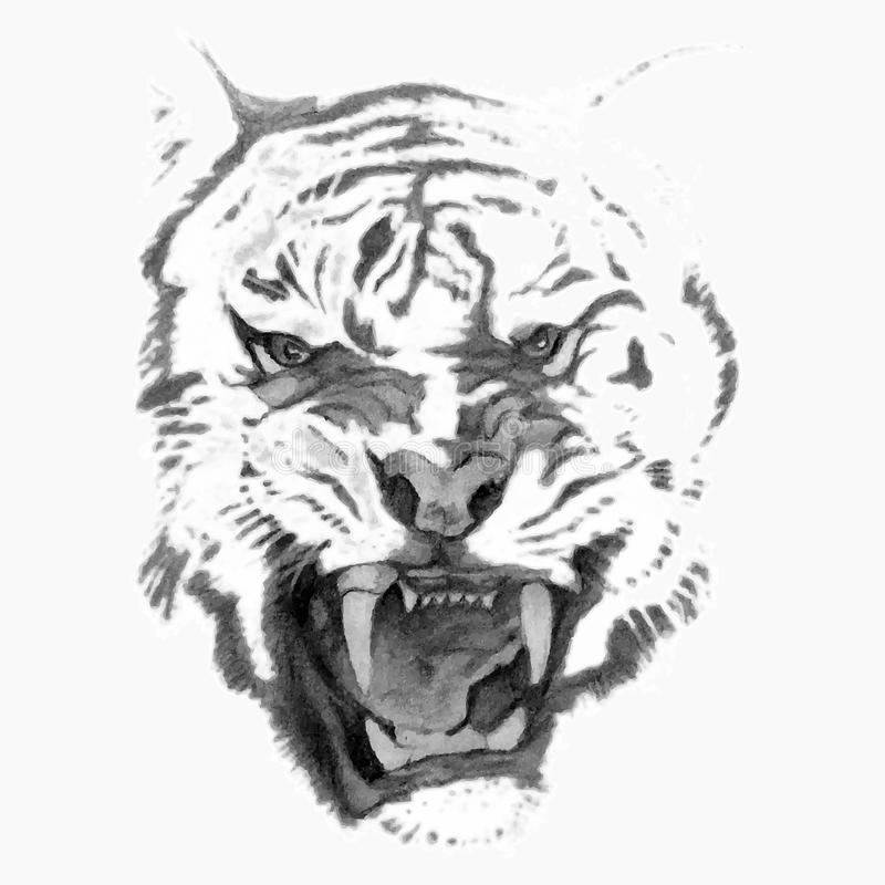 Tiger head (pencil) stock vector. Illustration of element ...