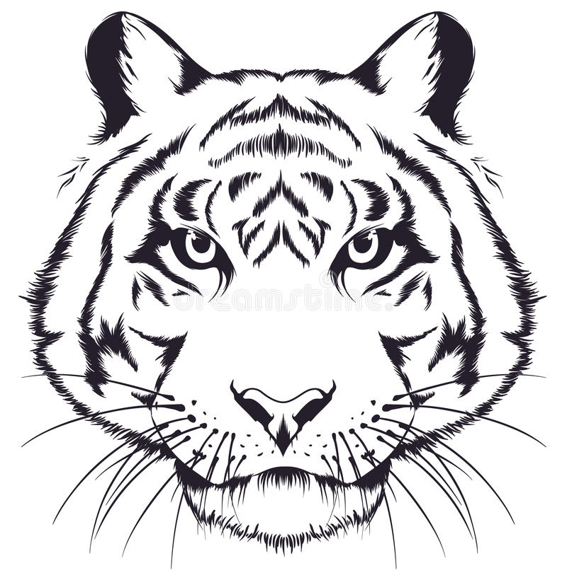 Tiger head royalty free illustration