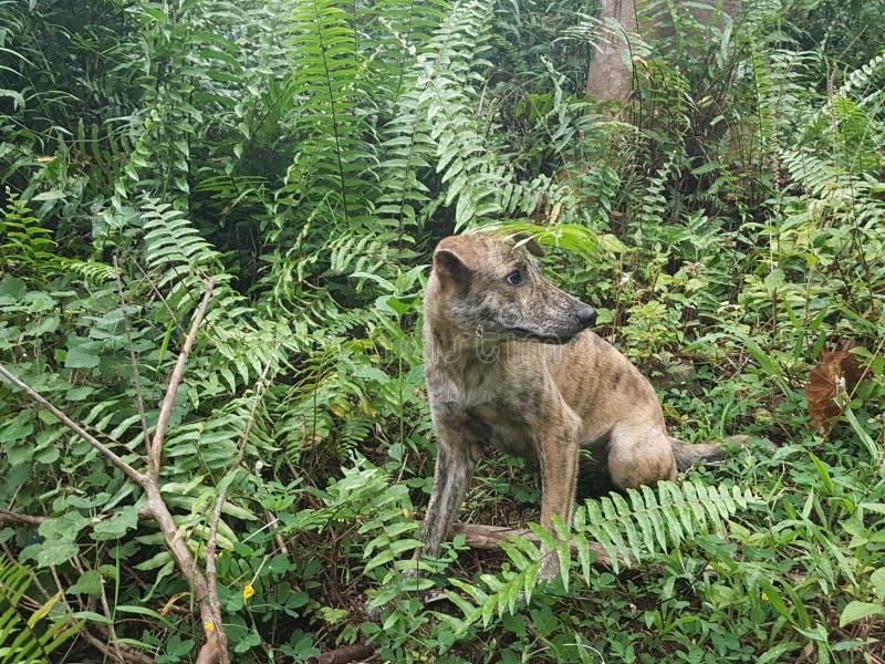 Tiger hunden royaltyfri fotografi