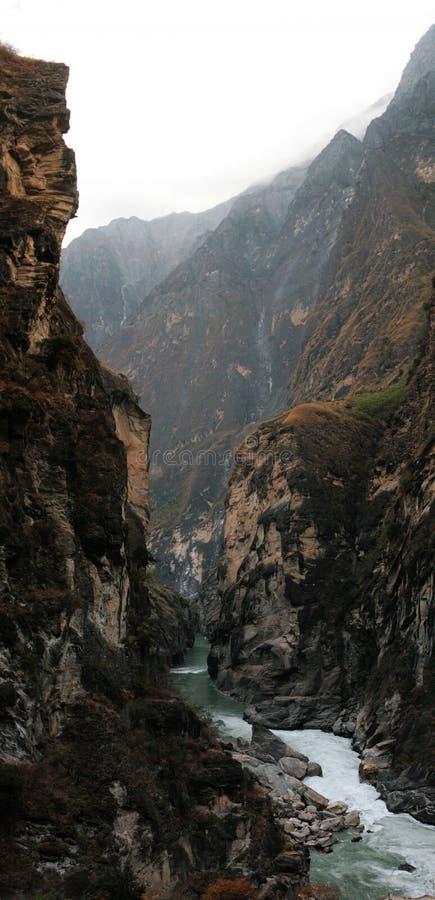 Tiger Jumping Gorge royalty free stock image