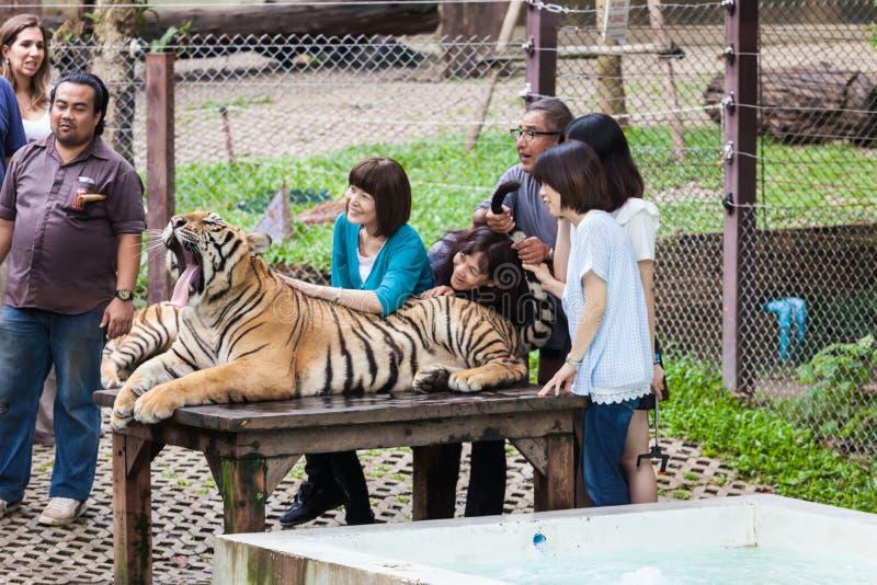 Tiger Kingdom imagens de stock royalty free
