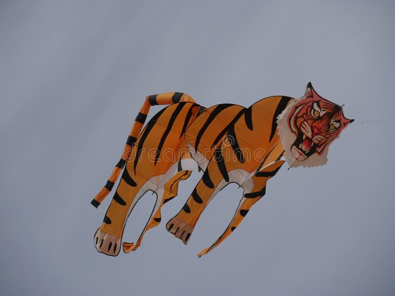 Tiger Kite stock foto's