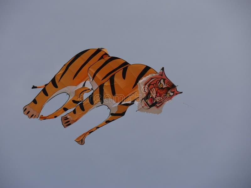 Tiger Kite imagem de stock royalty free