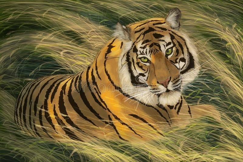 Tiger lies in a grass. Tiger lies in a yellow-green grass royalty free illustration