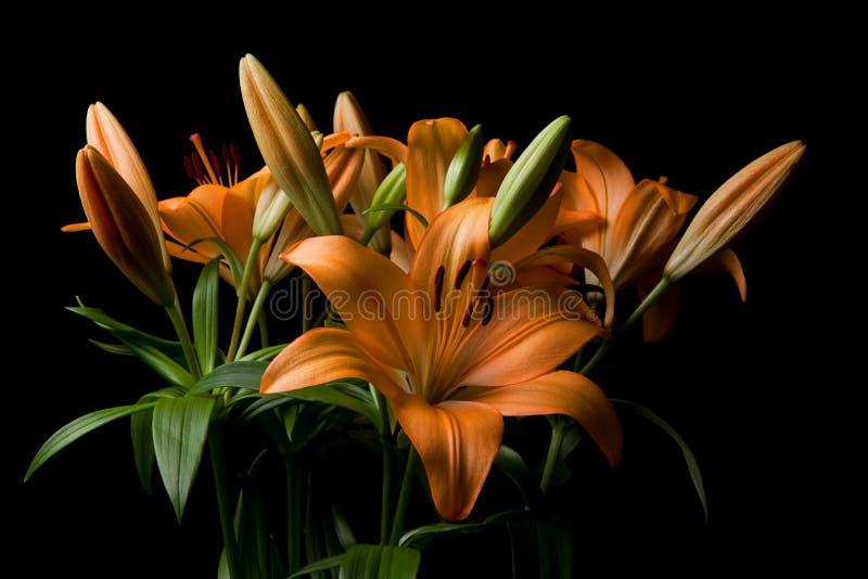 Download Tiger Lily Flower Arrangement Stock Image - Image: 13332585