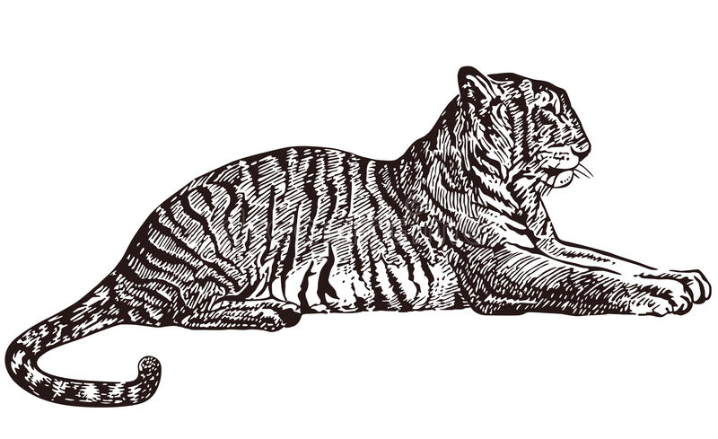 Download Tiger lying stock vector. Illustration of texture, tattoo - 22409335