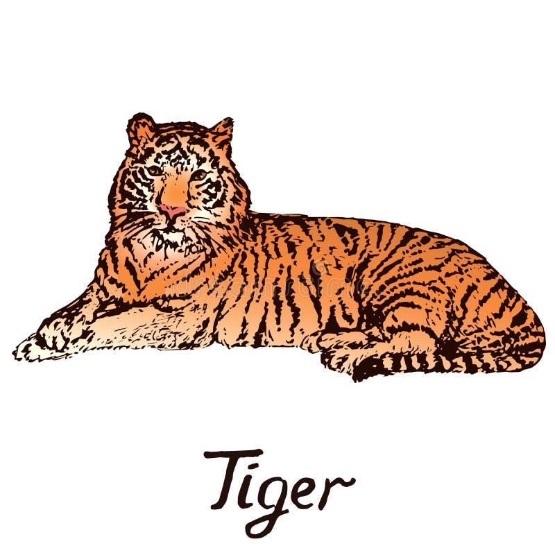 Tiger lying portrait, hand drawn doodle color sketch stock illustration