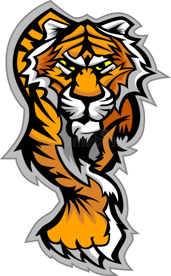 Download Tiger Mascot Body Graphic stock vector. Image of tigers - 22714271