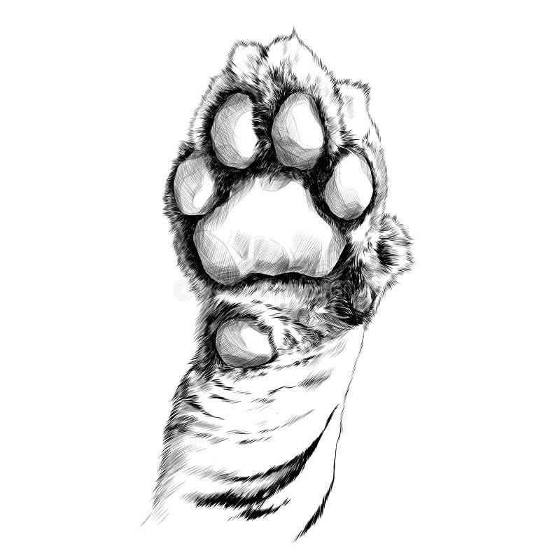 Tiger paw sketch vector stock illustration