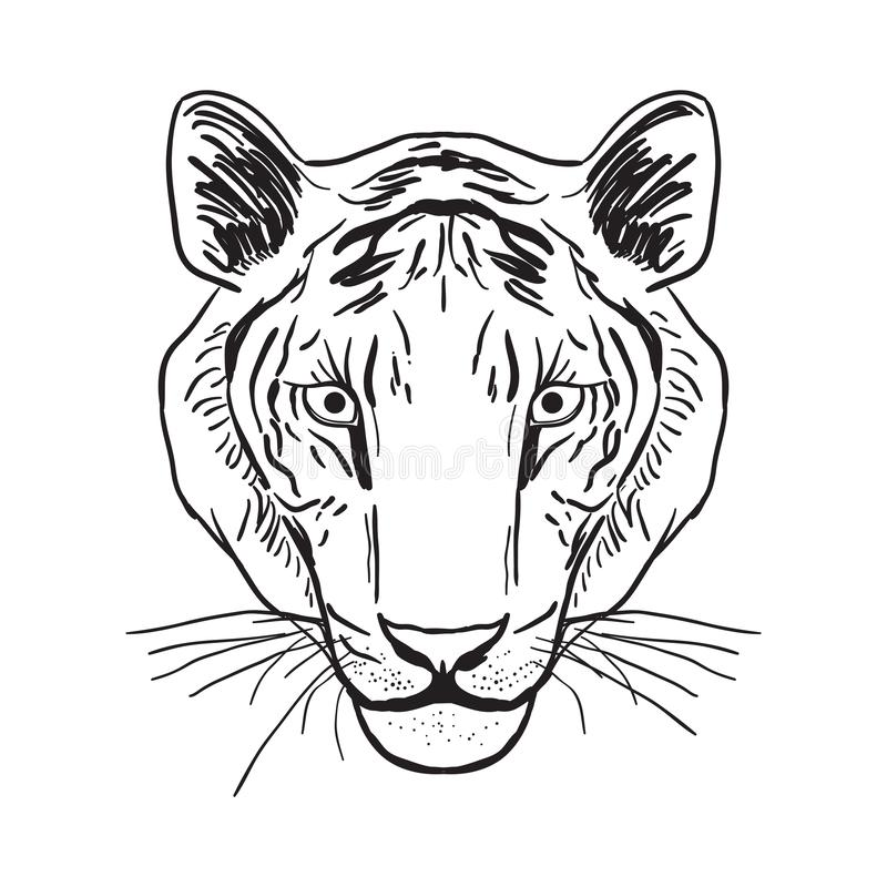Tiger portrait, head Sketch drawing. Black contour on a white background. Vector royalty free illustration