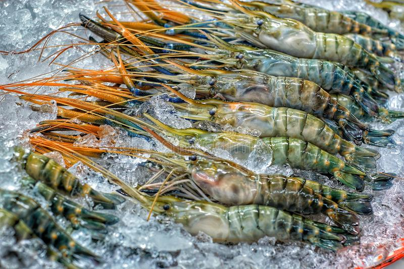 Tiger Prawns stock photography