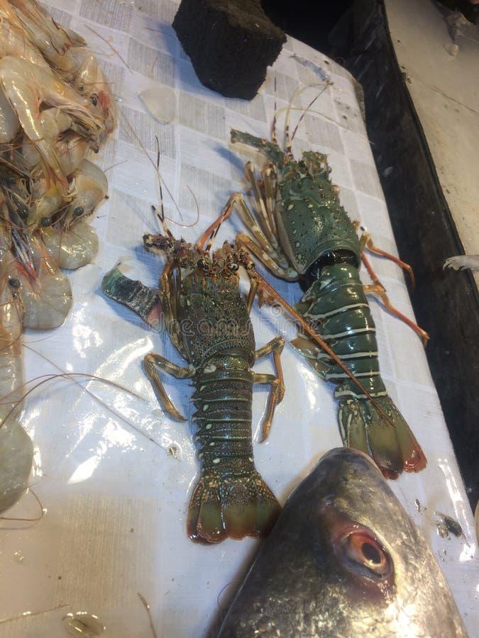 Tiger Prawns Lobster Green Fish arkivbild