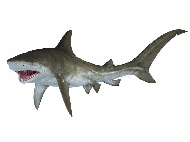 Tiger Shark Attack Posture illustration stock