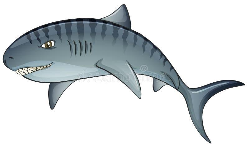 tiger shark stock vector illustration of cartoon dangerous 48932693 rh dreamstime com tiger shark cartoon images tiger shark cartoon images