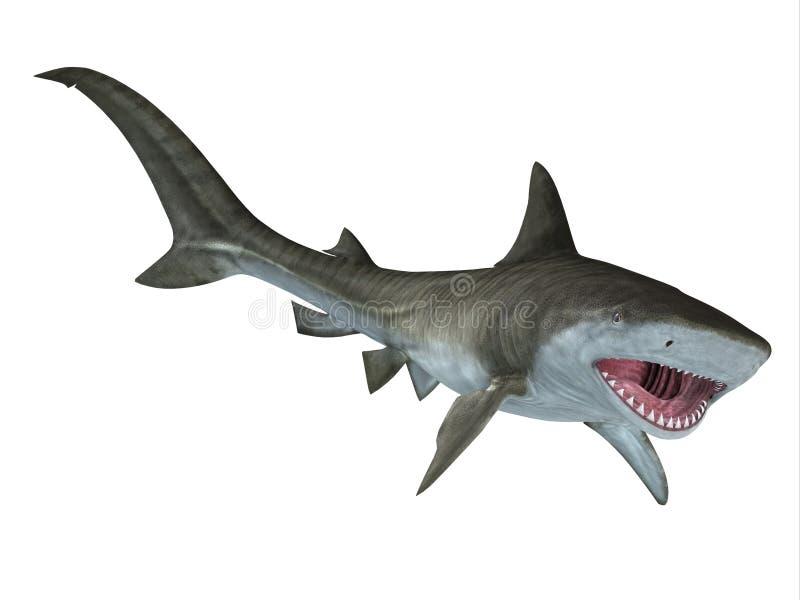 Tiger Shark Jaws stock illustrationer