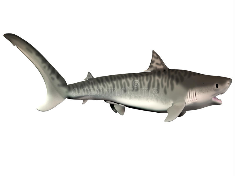 Polynesian Sharks Mouth By Cameron Rutten: Mouth Open Shark Stock Illustrations