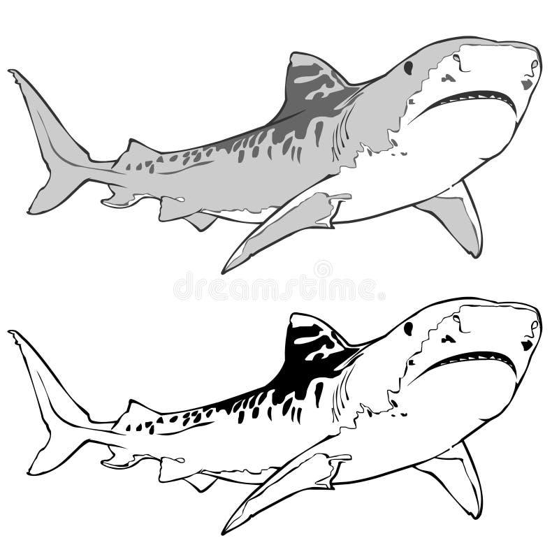 Tiger Shark Vector Illustration royalty free stock photography