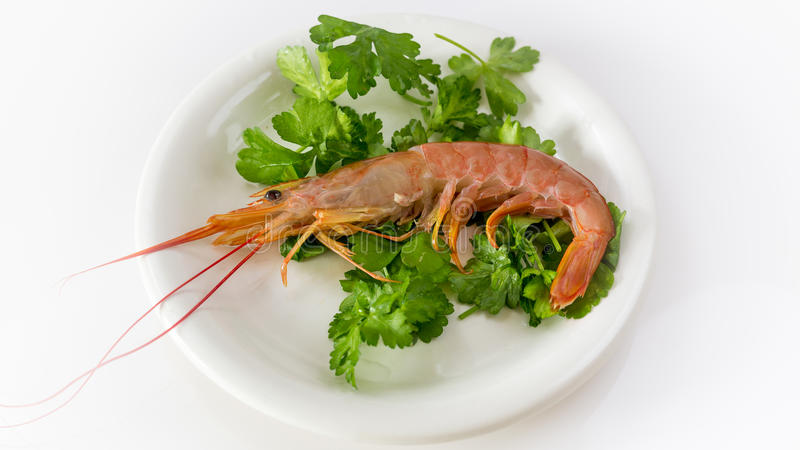 Tiger Shrimp stock foto
