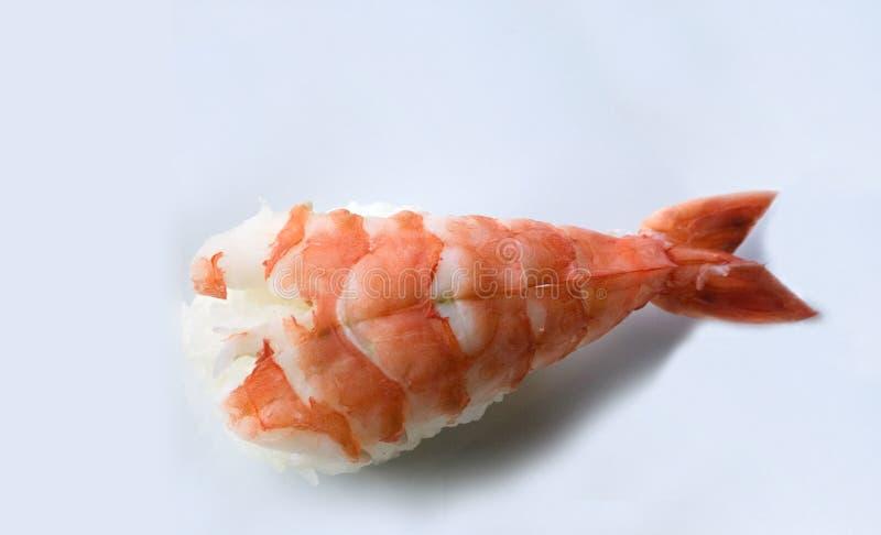 Tiger shrimp sushi on white stock images