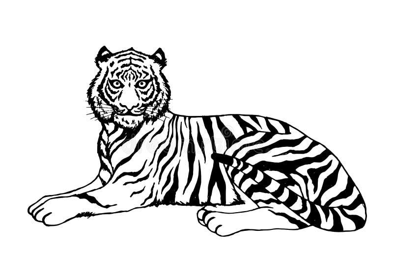 Tiger sitting vector illustration design hand drawing art royalty free illustration