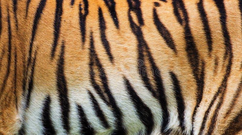Tiger skin texture stock image