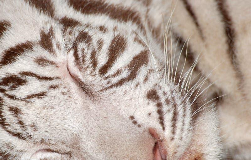 Download Tiger Sleeping Stock Image - Image: 11542251