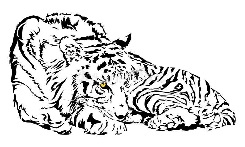 Tiger starrt an lizenzfreie abbildung