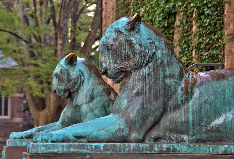 Tiger Statues na Universidade de Princeton fotos de stock