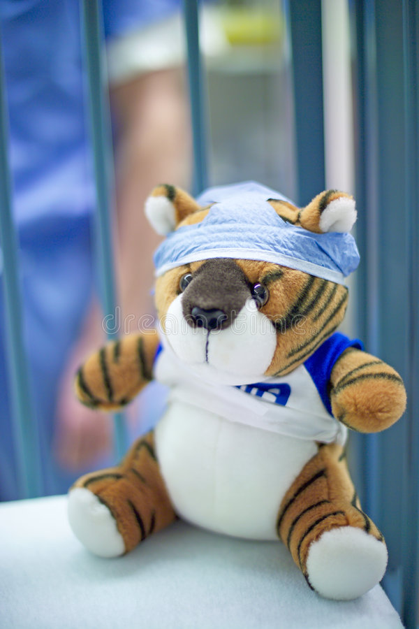 Tiger in surgery royalty free stock photo