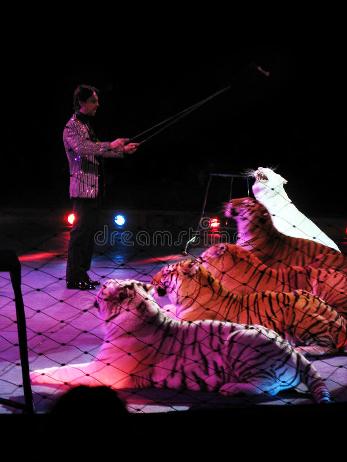 Download The Tiger Tamer Editorial Stock Image - Image: 18156684