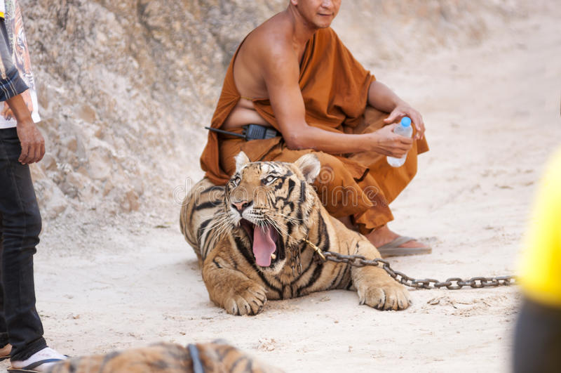 Tiger Temple royalty-vrije stock afbeeldingen