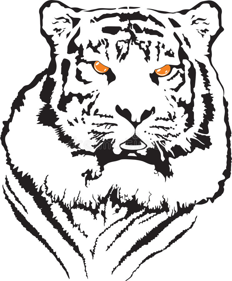 Free Tiger Vector Royalty Free Stock Photography - 11817937