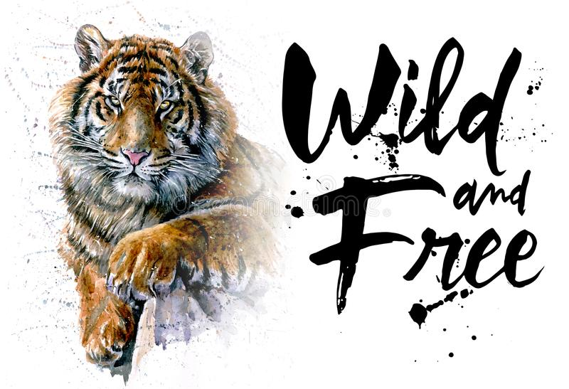 Tiger watercolor painting, animals predator, design of t-shirt, wild and free, print, hunter, king of jungle. Tiger, watercolor painting, animals, predator stock illustration