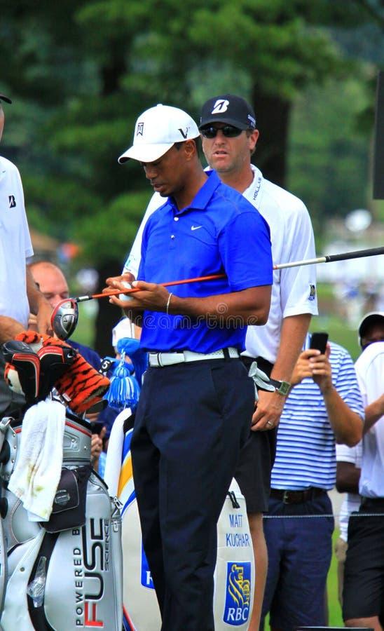Tiger Woods ждет для того чтобы ударить стоковые изображения rf