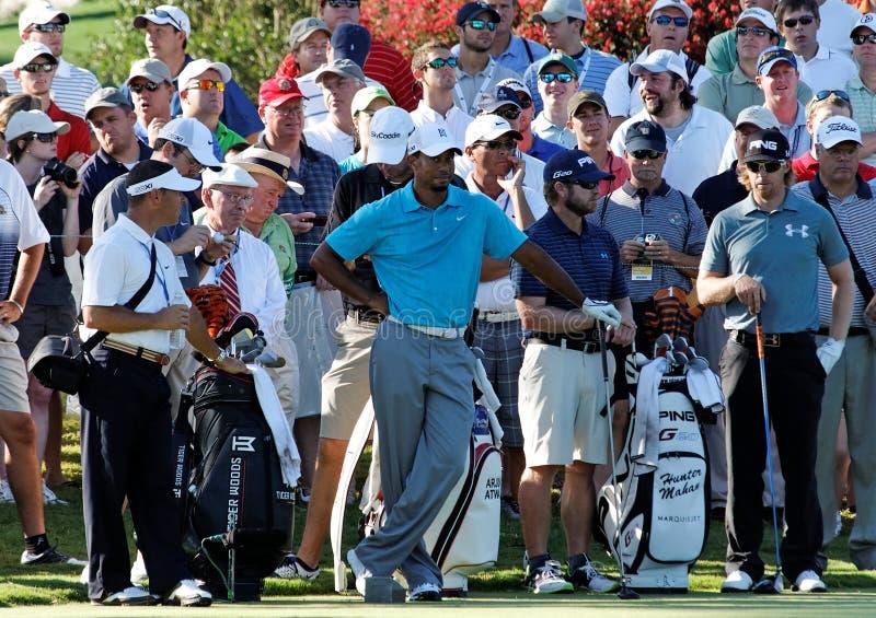Tiger Woods photographie stock libre de droits