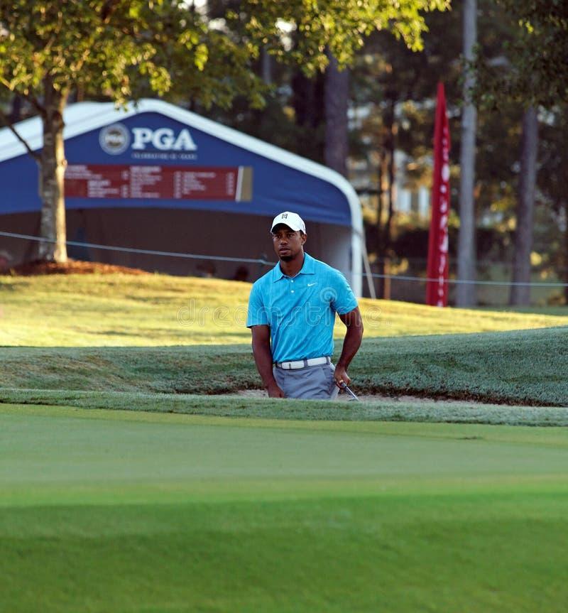 Tiger Woods stockfotos