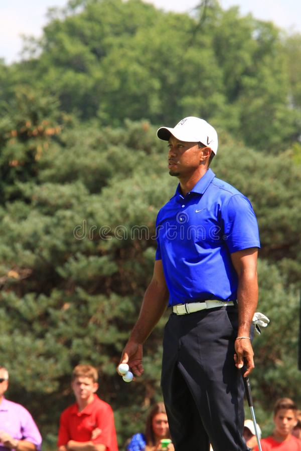 tiger woods obrazy royalty free