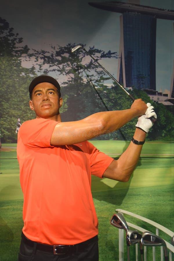 Tiger Woods royaltyfri foto