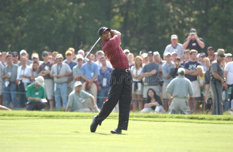 Tiger Woods royaltyfri fotografi