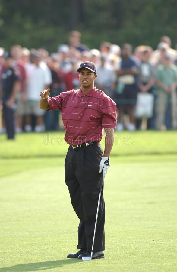 Tiger Woods arkivfoton