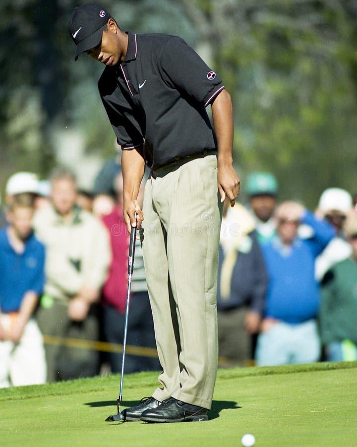 Tiger Woods brakuje uderzenie zakańczające fotografia royalty free