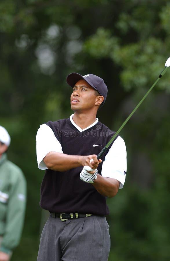 Tiger Woods Fachowy golfista obraz stock