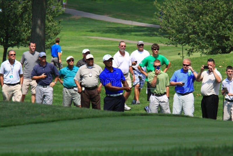 Tiger Woods golfista fotografia royalty free