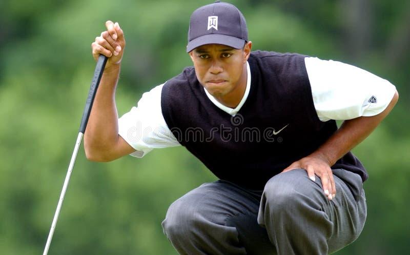 Tiger Woods observe un putt image libre de droits