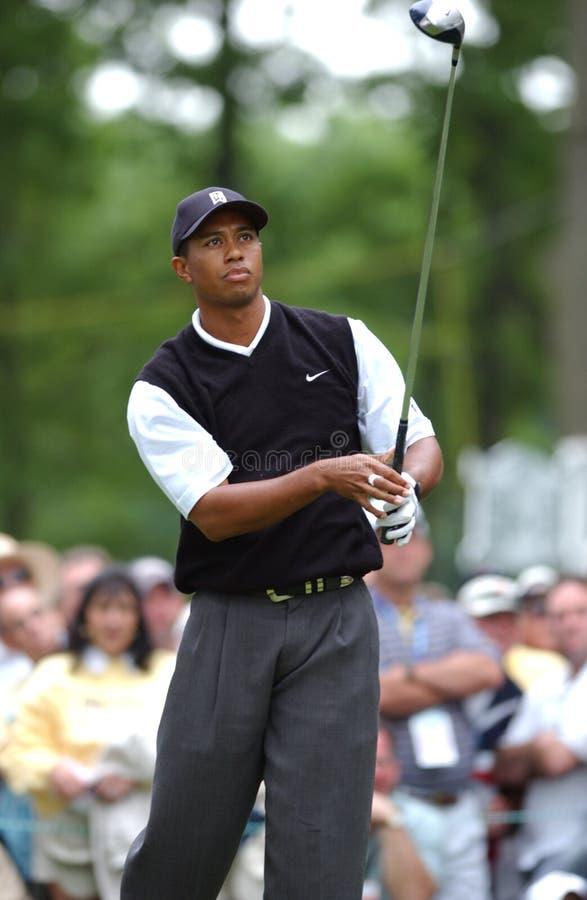 Tiger Woods Professional Golfer royaltyfri bild