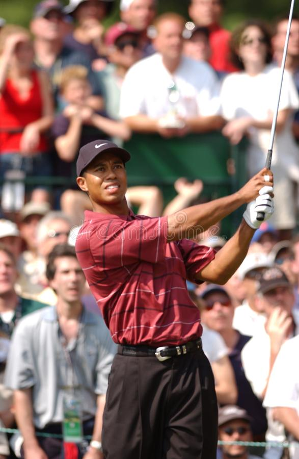 Tiger Woods Professional Golfer royalty-vrije stock fotografie